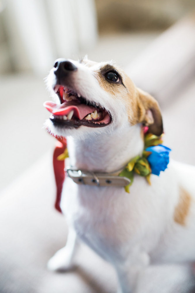 dog wearing a flower wedding collar