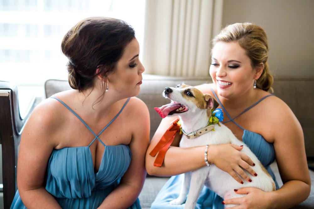 blue bridesmaid dresses, dog wearing a flower wedding collar